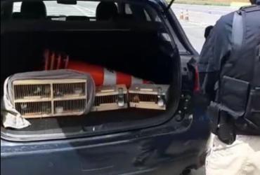 Pássaros silvestres transportados da Bahia com destino a SP são apreendidos | Divulgação | PRF
