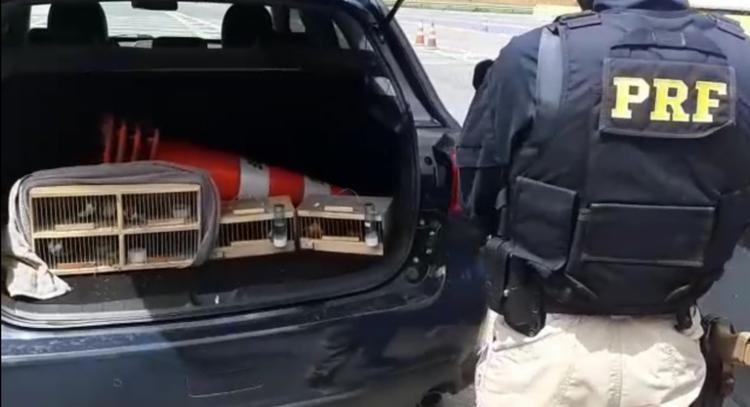 Animais estavam sendo transportados sem ventilação e alimentação, da BA até SP | Foto: Divulgação | PRF - Foto: Divulgação | PRF