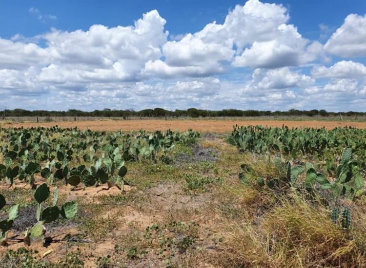 Objetivo é resgatar sementes crioulas e plantas adaptadas à região semiárida - Foto: Divulgação