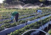 Reforma tributária precisa diminuir o custo de produção do agricultor, diz economista | Foto: Valter Campanato | Agência Brasil | 24.8.2017