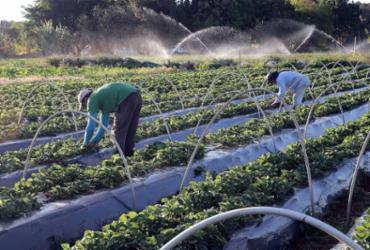 Reforma tributária precisa diminuir o custo de produção do agricultor, diz economista | Valter Campanato | Agência Brasil | 24.8.2017