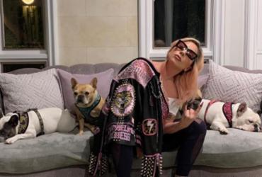 Cães de Lady Gaga são roubados em tiroteio em Hollywood | Reprodução