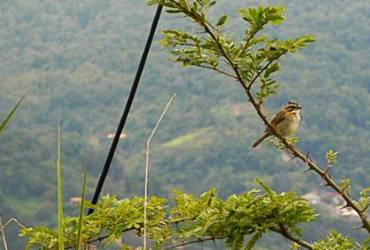 Mais de 25 mil espécies da flora só existem no Brasil, mostra estudo | Divulgação | PlantVerde