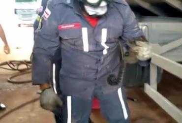 Bombeiros resgatam sagui de chassi de caminhão
