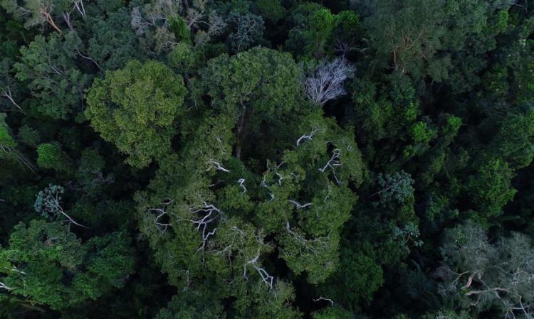 Avisos de desmatamento caem 21% nos últimos 6 meses | Foto: Divulgação | TV Brasil - Foto: Divulgação | TV Brasil