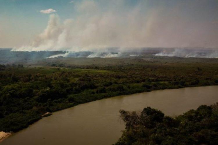 Especialistas explicam que o fenômeno, chamado de decoada, ocorre no período de subida das águas dos rios da região I Foto: Reprodução - Foto: Reprodução