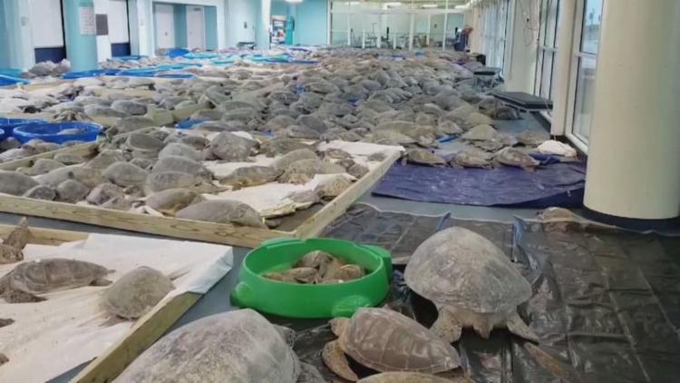 Mais de 4.700 animais foram levados por voluntários até um centro de convenções que foi transformado em hospital veterinário I Foto: Reprodução - Foto: Reprodução