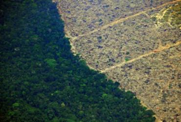 Brasil lidera perda de florestas tropicais no mundo | Foto: AFP