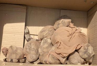 Caixa com 15 serpentes é encontrada em agência dos Correios | Reprodução
