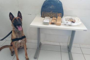 Cão da PM encontra tabletes de maconha no extremo oeste baiano