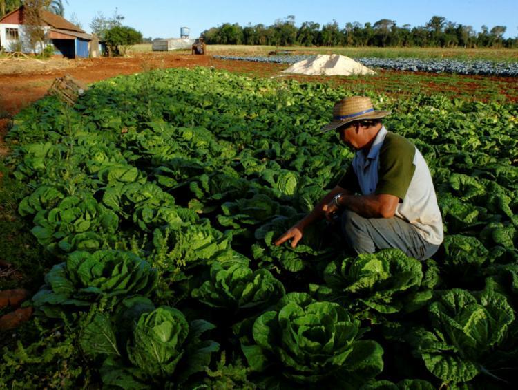 Agricultores não contam com planejamento estratégico   Foto: Antonio Costa   Fotos Públicas - Foto: Antonio Costa   Fotos Públicas
