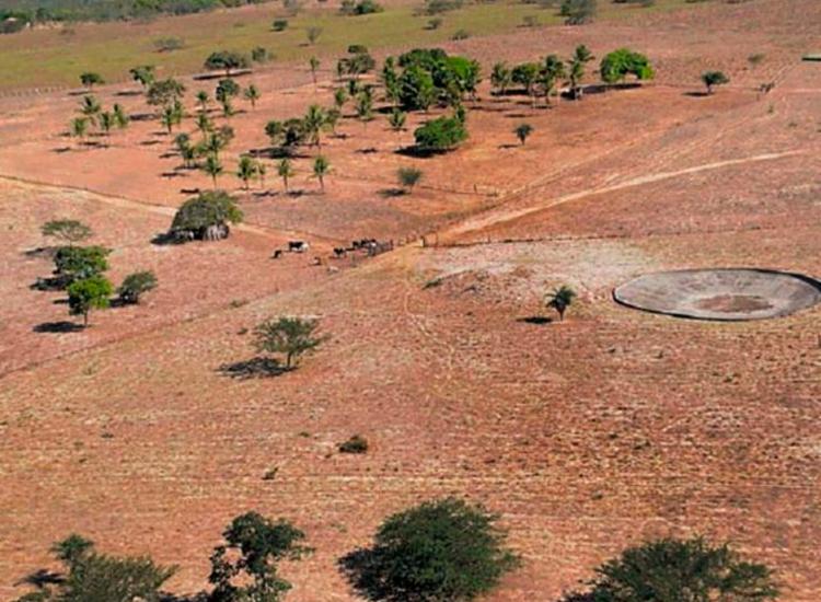 Cidades chegaram a perder cerca de 80% das plantações | Foto: Jorge Magalhães | Divulgação | Secom Feira de Santana - Foto: Jorge Magalhães | Divulgação | Secom Feira de Santana