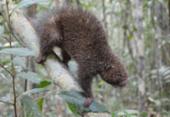 Animais silvestres apreendidos e reabilitados são soltos em reserva ambiental | Foto: Acervo Bracell