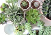 Pandemia e isolamento aumentam procura por cultivo de plantas em casa | Foto: Reprodução