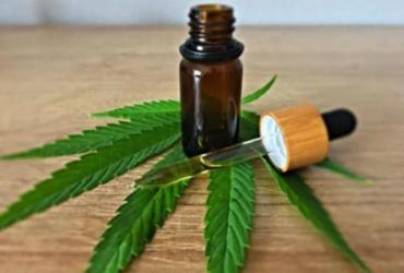 Câmara: plantio de maconha para fins medicinais tem parecer favorável | Pixabay