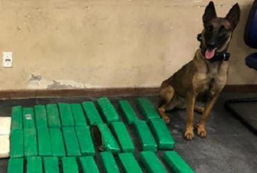 Polícia apreende 50 kg de drogas em local de mata fechada em Feira de Santana
