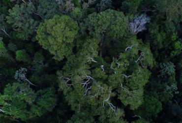 Inpe cria plataforma gratuita de dados do solo brasileiro | Divulgação | TV Brasil