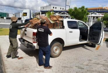 Operação conjunta resgata 130 animais silvestres em Paulo Afonso