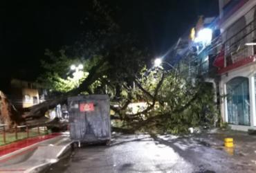 Árvore cai na Praça da Revolução e bloqueia via em Periperi | Reprodução | WhatsApp