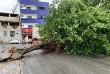 Árvore caída bloqueia trânsito na Federação | Reprodução | Twitter