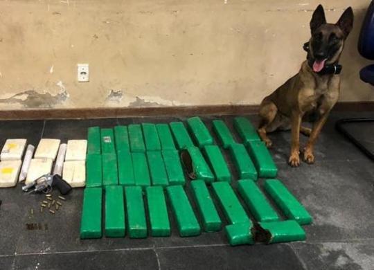 Polícia apreende 50 kg de drogas em local de mata fechada em Feira de Santana   Divulgação   SSP-BA