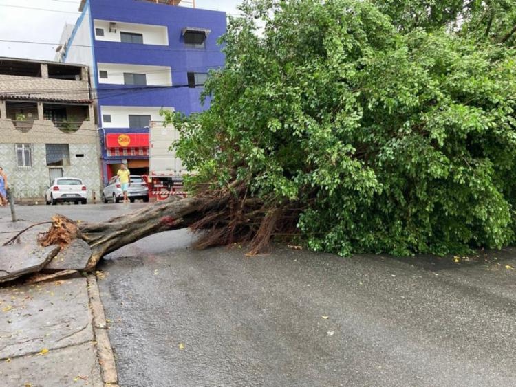 Equipes da Seman estão no local para remover a árvore e a Transalvador está dando apoio - Foto: Reprodução   Twitter
