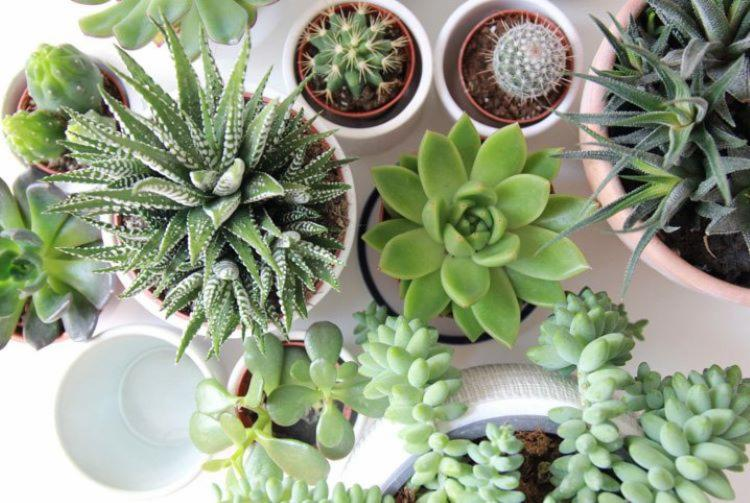 Além de embelezar a casa, atividade pode ser terapêutica I Foto: Reprodução - Foto: Reprodução