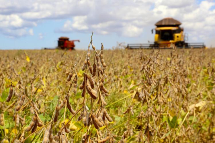 Produção de soja bate recorde no oeste baiano - Foto: Divulgação