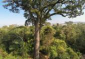 Governo baiano afirma que tem atuado no combate ao desmatamento ilegal | Foto: Cassio Vasconcello I Agência Brasil