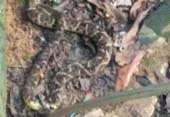 Cobras são resgatadas em quintal de casa na Fazenda Grande I | Foto: Reprodução | Gepa