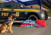 Cão farejador encontra mais de 20 kg de maconha em ônibus na BR-116 | Foto: Divulgação