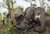 Raio teria matado 18 elefantes em reserva florestal na Índia | Foto: AFP