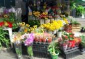 Mercado das Flores apresenta opções para Dia das Mães | Divulgação | Secom