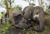 Raio teria matado 18 elefantes em reserva na Índia | AFP