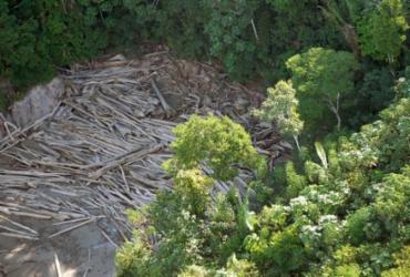 Amazônia Legal registra maior desmatamento em abril dos últimos 10 anos, diz Instituto | Arquivo | Agência Brasil