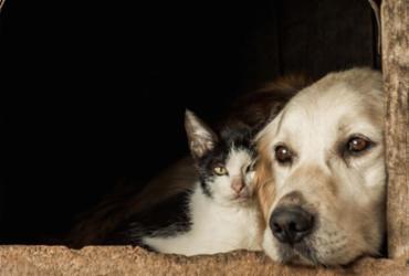 'Papo Pet' estreia no próximo domingo, com orientações sobre como lidar com os animais de estimação | Freepik / Divulgação