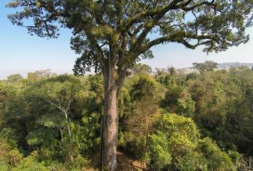 Governo baiano afirma que tem atuado no combate ao desmatamento ilegal   Cassio Vasconcello I Agência Brasil