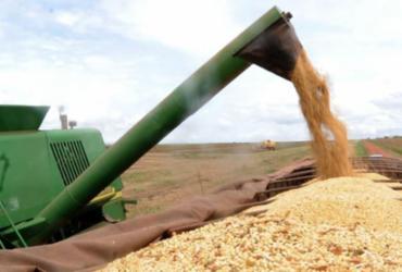 Conab prevê aumento de 5,7% na produção nacional de grãos | Arquivo | Agência Brasil