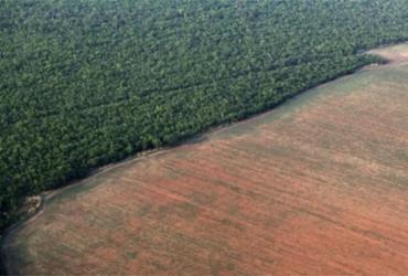 Desmatamento na Amazônia bate novo recorde em abril | Divulgação
