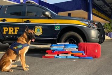 Cão farejador encontra mais de 20 kg de maconha em ônibus na BR-116 | Divulgação