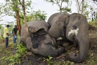 Raio teria matado 18 elefantes em reserva florestal na Índia | AFP