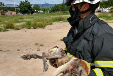 Bombeiros resgatam cadela em canal de esgoto na cidade de Itaberaba