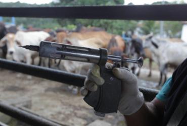 Vacinação contra febre aftosa vai até dia 31 de maio na Bahia | GOV-BA