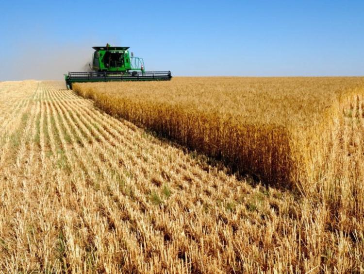 A agropecuária brasileira é uma das 5 maiores do mundo - Foto: Divulgação|