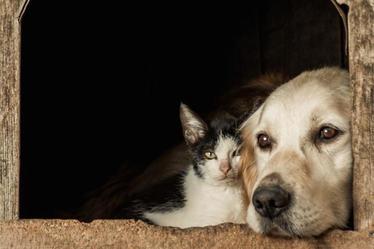 Brasil é quarto maior país em animais de estimação - Foto: Freepik / Divulgação