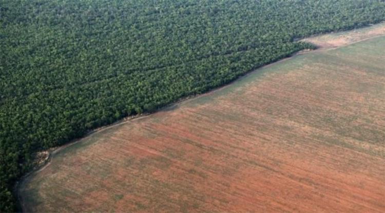 Segundo o levantamento, a área sob alerta de desmatamento foi de 1.062 km2, a maior para o mês de junho desde o ano de 2016 | Foto: Divulgação - Foto: Divulgação