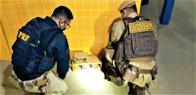 Animais foram encontrados em gaiolas dentro de compartimento | Foto: Divulgação | PRF - Foto: Divulgação | PRF