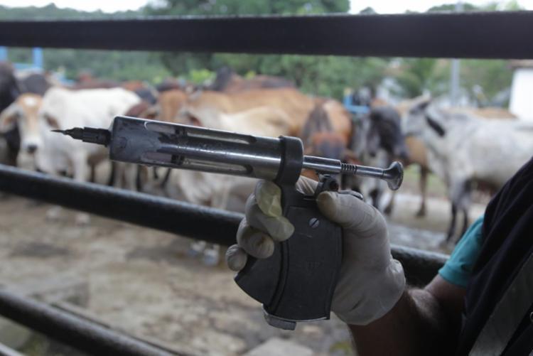 Há 23 anos a Bahia é considerada zona livre de febre aftosa I Foto: GOV-BA - Foto: GOV-BA