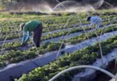 A quem interessa a briga agro x ambiente? | Foto: Agência Brasil | Arquivo