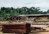 Classificação de madeira pode beneficiar consumidor, diz ministério | Foto: